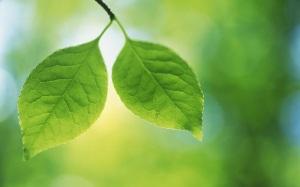 duo-de-hojas