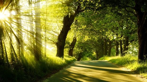 camino-soleado